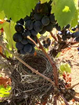 Clos Centeilles domaine viticole damier 3
